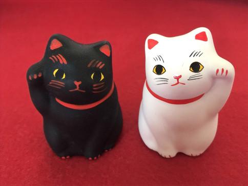 白黒ペア猫