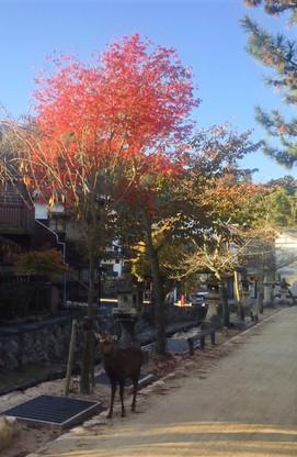 神社裏手、川沿い