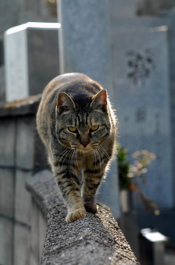 猫の道.JPG