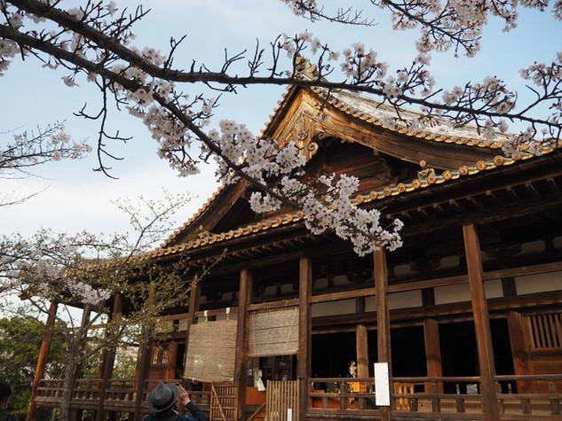 千畳閣と桜
