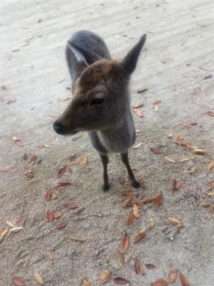 落ち葉と鹿さん