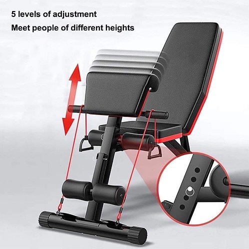 Vector Multi Function Bench with Preacher Curl