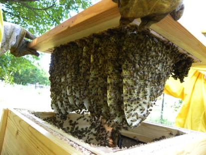 apicultura oderzo imm.png