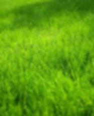 lemongrasslandscape.jpg