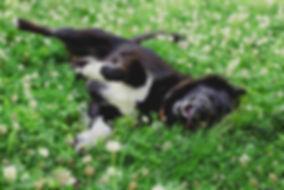 rolling dog.jpg