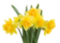Yelllow Flowers