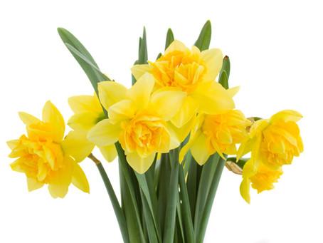 Thanks for Easter Flowers