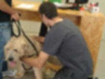 L'aspecte clínic de l'animal és important. Palpar. Revisar mucoses. Revisió de la pell. Especialistes en fisioterapia i rehabilitacio.