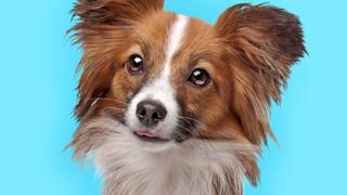 Orthesen für Haustiere