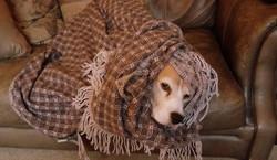 """""""Helpful hound"""""""