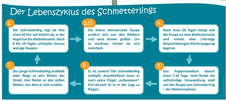 Hagemann_Lebenszyklus_Text.png