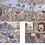 Thumbnail: Приключения Яи и Тудо. Побег из Шанхая