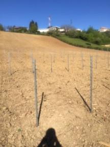 Plantation 2020
