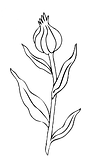 Flower cut out 6.png