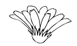 flower head 3.png