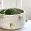 Thumbnail: Sprout serving bowl
