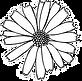 flower%20head%201_edited.png