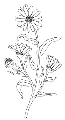Flower cut out 8.png