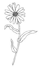 Flower cut out 7.png