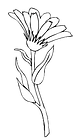 flower and stem 2.png