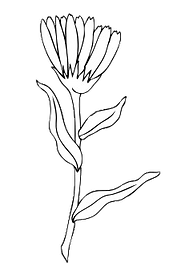 single flower stem cut out.png