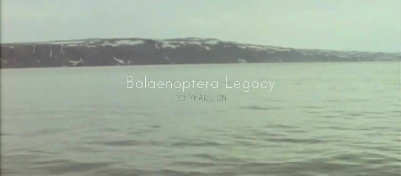 Balaenoptera Legacy - 30 Years On