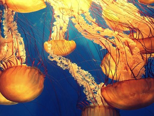 La conquista dei nostri mari da parte delle meduse