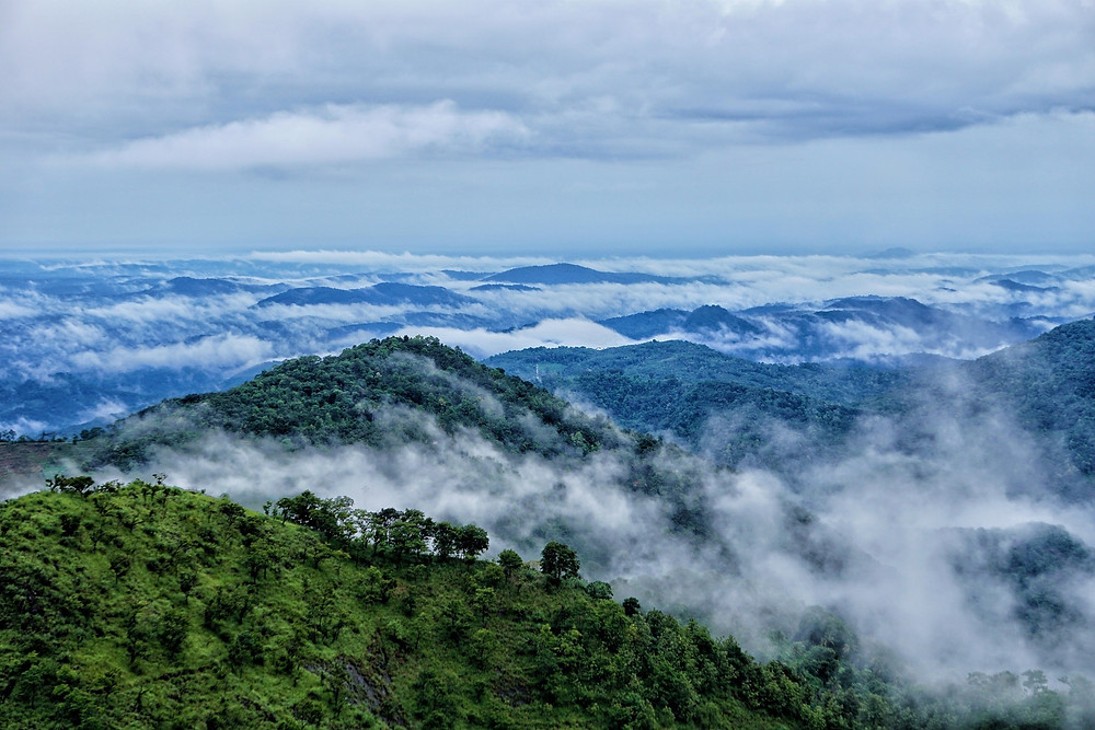 Wayanad, Kerala - one of the many hidden gems in India