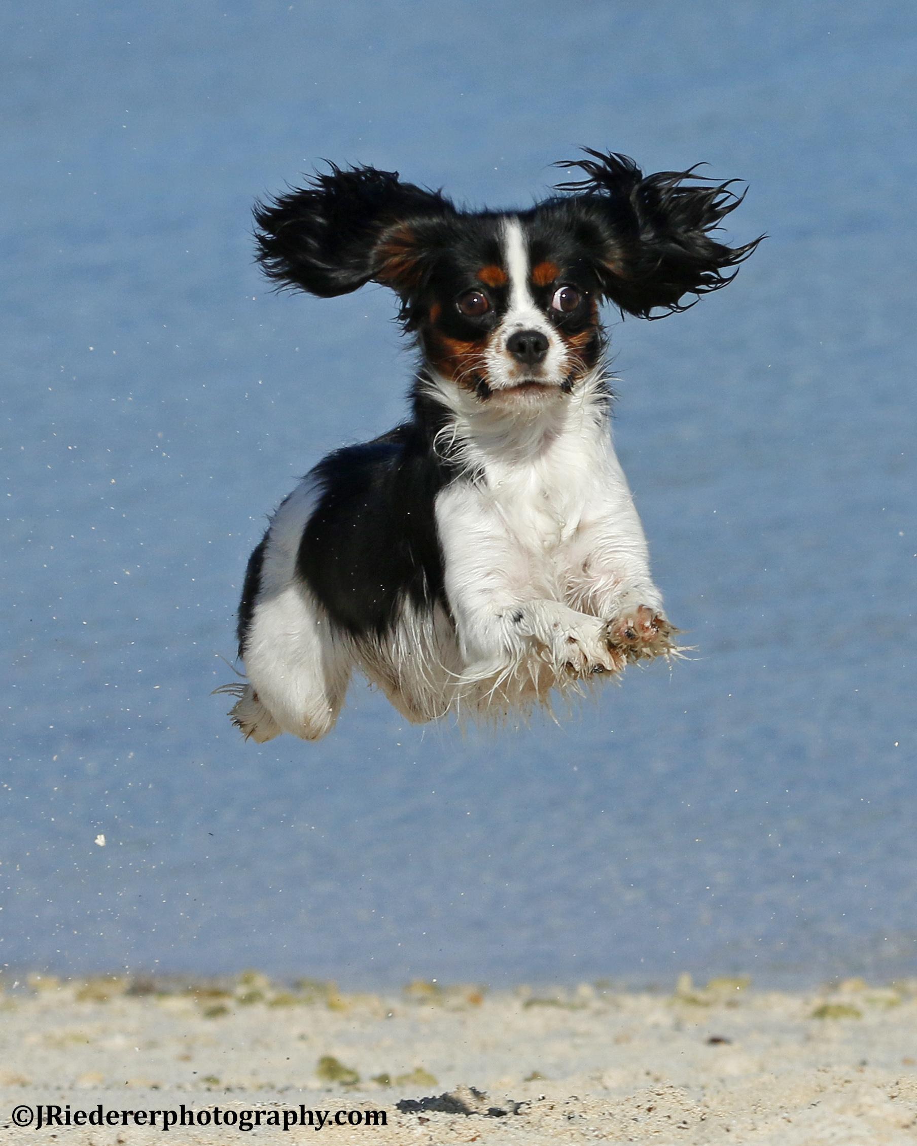 Puppy Play