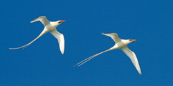 For Love of Longtails