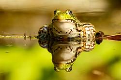 frog website
