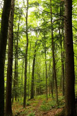 Spring walk, Vermont