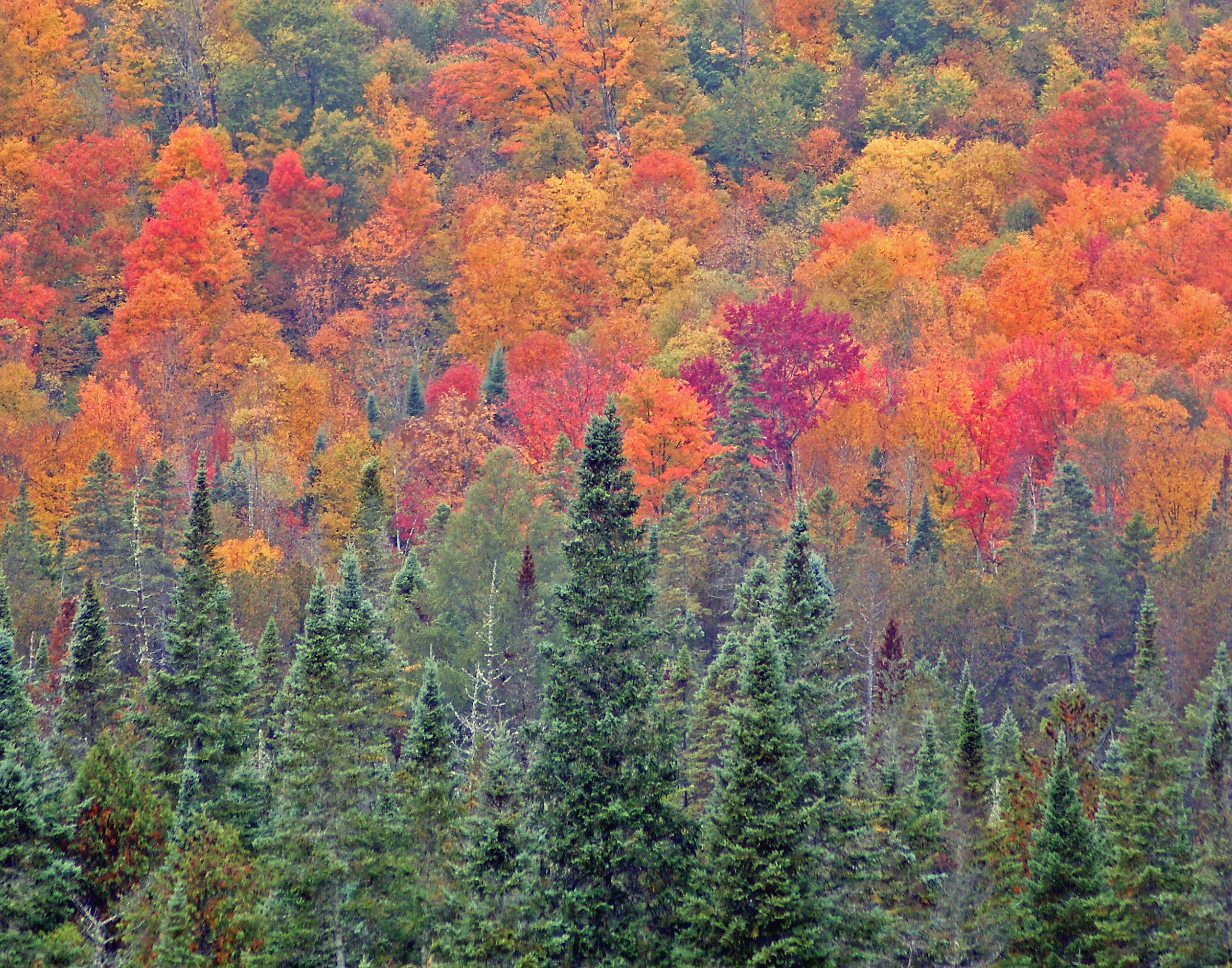 Fall Glow, Vermont, USA