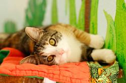 Cutie pie kitten