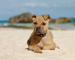 Puppy in Paradise