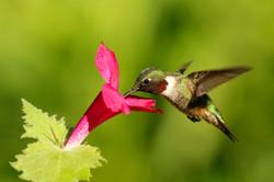 Little Bird, Big Flower