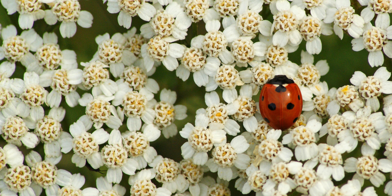 Spots and Petals