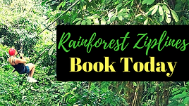 Rainforest Ziplines Puerto Rico