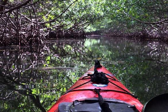 Biobay Kayak Experience