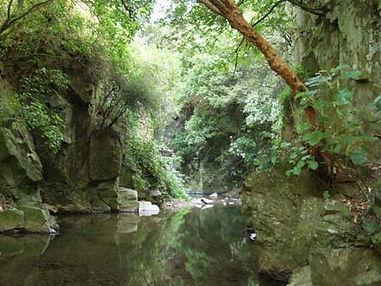 City Streams Ngaio Gorge.jpg