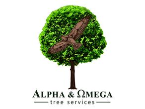Certified Arborist / Climbing Arborist