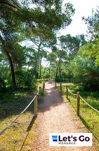 Menorca Pines.JPG