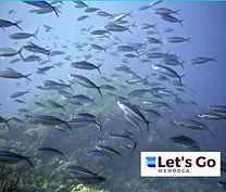 Menorca Diving Sq E.JPG