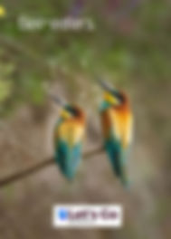 bee eaters menorca.JPG