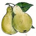 pears-01.jpg