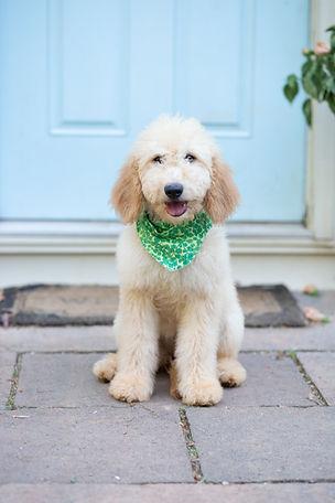 Update Puppy Pictures-104.jpg