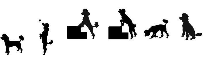 Poodle_silhouette_set.jpg
