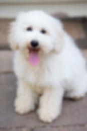 Update Puppy Pictures-146.jpg