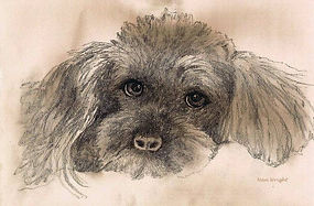 Sketch-of-Poodle_art.jpg