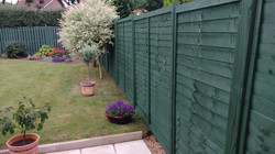 Fence Installation & Painting